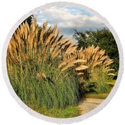 Ornamental White Pampas Grass-1 Round Beach Towel