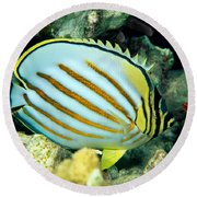 Ornate Butterflyfish Round Beach Towel