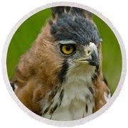 Ornate Hawk Eagle Round Beach Towel