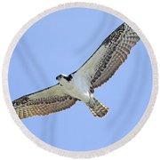 Osprey 1-30-11 Round Beach Towel