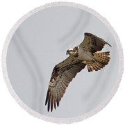 Osprey Aloft Round Beach Towel