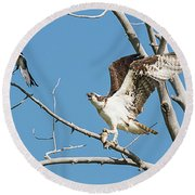 Osprey And Black Billed Magpie Round Beach Towel