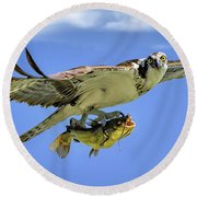 Osprey And Catfish Round Beach Towel