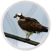 Osprey Round Beach Towel