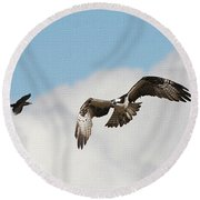 Osprey Botherd By Grackle Round Beach Towel