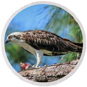 Osprey Breakfast Break Round Beach Towel
