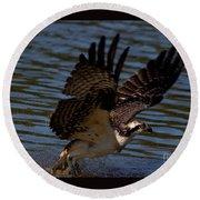 Osprey Catching A Fish Round Beach Towel