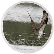 Osprey Dive Round Beach Towel