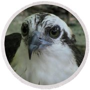 Osprey Portrait Round Beach Towel