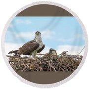 Osprey Family Round Beach Towel