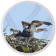 Osprey Family Portrait No. 1 Round Beach Towel
