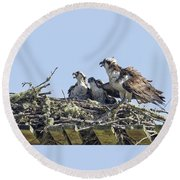 Osprey Family Portrait No. 2 Round Beach Towel