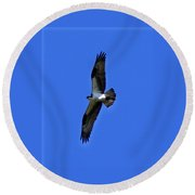 Osprey In Flight 1 Round Beach Towel