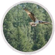 Osprey In Flight 6 Round Beach Towel