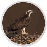 Osprey In Nest Round Beach Towel