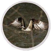 Osprey In The Creek Round Beach Towel