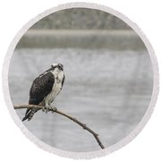 Osprey Looking Over The Rogue River Round Beach Towel