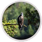 Osprey On Branch Round Beach Towel