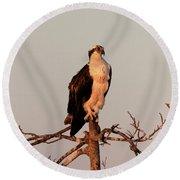Osprey On The Caloosahatchee River In Florida Round Beach Towel