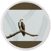 Osprey Perched Round Beach Towel