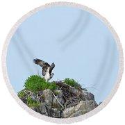Osprey Sitting On A Ledge In Casco Bay  Round Beach Towel