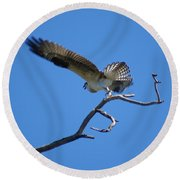 Osprey Takeoff Round Beach Towel