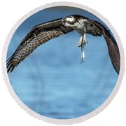 Osprey With Pin Fish Round Beach Towel
