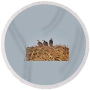 Osprey Young Round Beach Towel