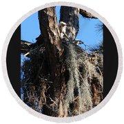Ospreys In Spanish Moss Nest Round Beach Towel
