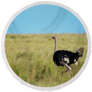 Ostrich On The Run Round Beach Towel