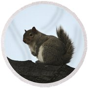 Our Squirrel Chubby Round Beach Towel