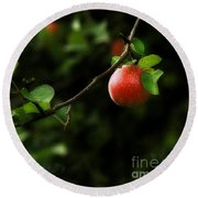 Out On A Limb  A Tempting Photograph Of A Tasty Ripe Red Apple On A Tree  Round Beach Towel