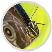 Owl Butterfly In Yellow Flower Round Beach Towel