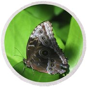 Owl Butterfly On A Cluster Of Green Leaves Round Beach Towel