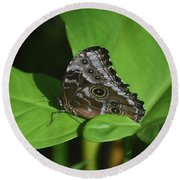 Owl Butterfly With Fantastic Distinctive Eyespots  Round Beach Towel