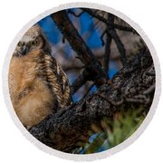 Owlet In A Fir Tree Round Beach Towel
