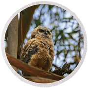 Owlet Lookout Round Beach Towel