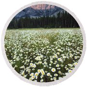 Ox-eyed Daisies And Cascade Mountain Round Beach Towel