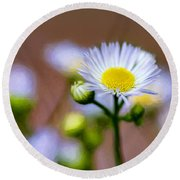 Oxeye Daisy - Paint Round Beach Towel