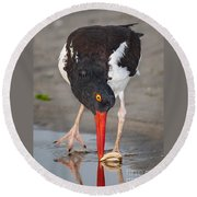 Oystercatcher Eating Clam Round Beach Towel
