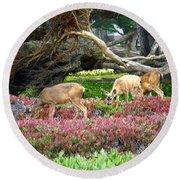 Pacific Grove Deer Feeding Round Beach Towel