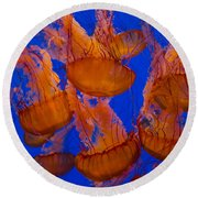 Pacific Sea Nettle Cluster 1 Round Beach Towel