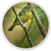 Painted Bunting Female Round Beach Towel