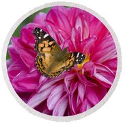 Painted Lady On Dahlia Round Beach Towel
