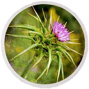 Painted Milk Thistle Round Beach Towel