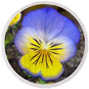 Painting Of Pansey Flower Round Beach Towel