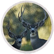 Pair Of Bucks Round Beach Towel