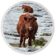 Pair Of Cows Grazing On The Burren In Ireland Round Beach Towel