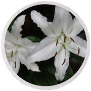 Pair Of Flowering White Stargazer Lilies In Bloom Round Beach Towel