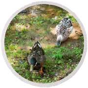 Pair Of Mallard Duck 5 Round Beach Towel